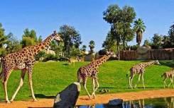 safari-park-fukuok-2
