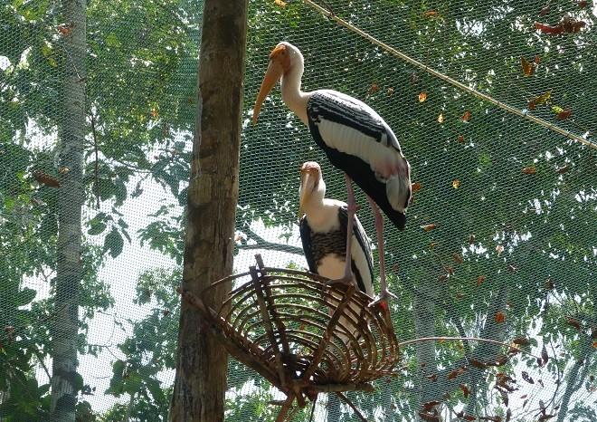 Вольер с птицами в сафари-парке на острове Фукуок