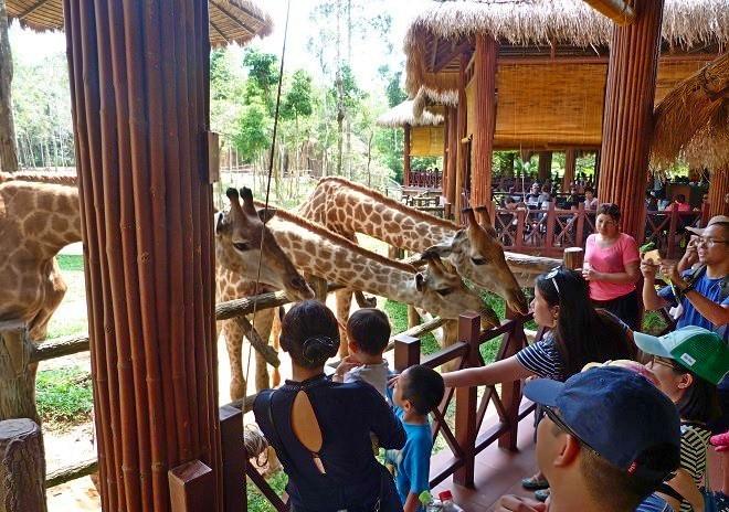 """Кормление жирафов в сафари-парке """"Винперл"""" на Фукуоке"""