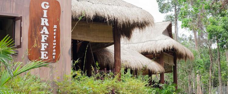 "Ресторан ""Жираф"" в сафари-парке Фукуока"