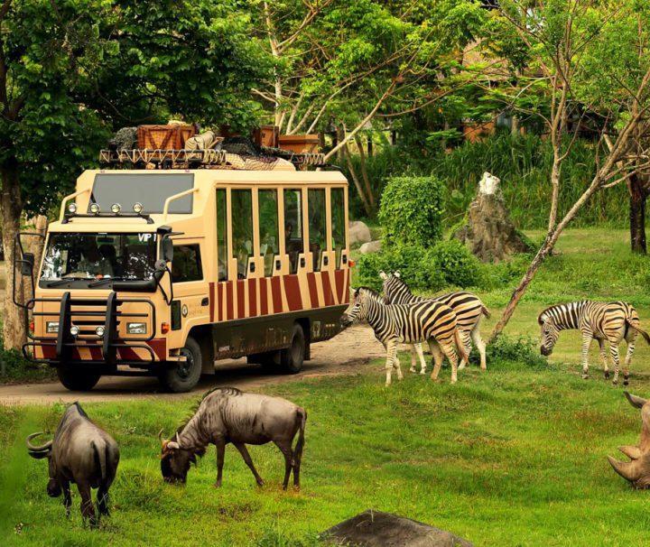 Экскурсия на автобусе в сафари-парке Винперл