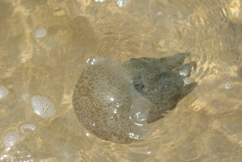 Редкие медузы на Фукуоке
